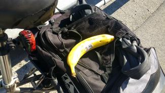 Found the bananas I lost yesterday